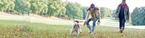 Muuttaminen koiran kanssa